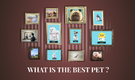 Copy of WHAT IS THE BEST PET ?