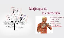 Morfología de la contracción