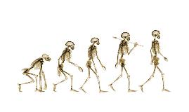 Charles Darwin Project