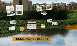 "PROBLEMÁTICA HUMEDAL ""EL BURRO"""