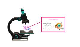 Copy of Partes de la Celula