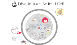 Dive into an Animal Cell