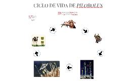 CICLO DE VIDA DE PILOBOLUS