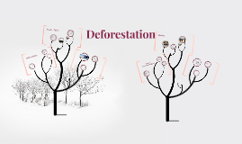 Copy of Copy of Deforestation