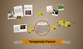 Temperate Forest Ecosystem