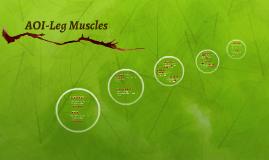 AOI-Leg Muscles