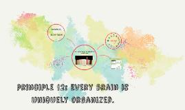 principle 12: Every brain is uniquely organized.