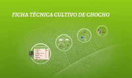 FICHA TÉCNICA CULTIVO DE CHOCHO