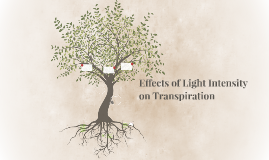 Transpiration of Plants
