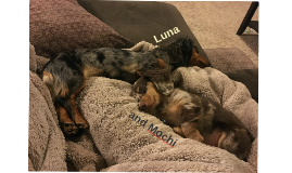 My Dachshunds