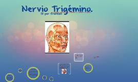 Nervio Trigémino.