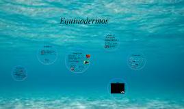 Copy of Equimodermos