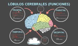 Copy of LÓBULOS CEREBRALES ( FUNCIONES)