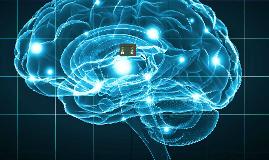 Les neurones peuvent se régénérer
