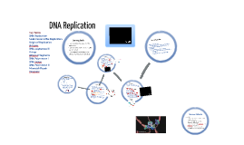 5.2: DNA Replication