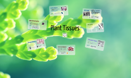 Plant Tissues (AS Biology)