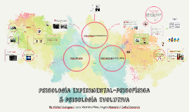 Copy of Psicología experimental-psicofísica