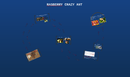 RASBERRY CRAZY ANT INVATION