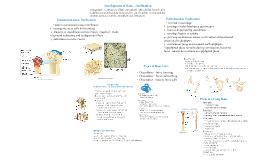 Skeletal Tissue