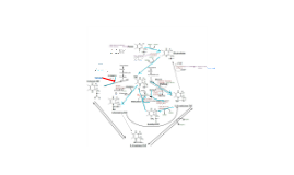 Krupenko-Amino Acid Metabolism