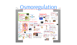 AP Bio- Regulation 3: Osmoregulation