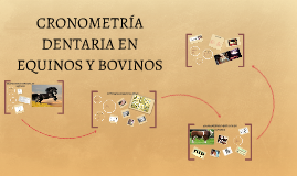 Copy of CRONOMETRÍA DENTARIA EN EQUINOS Y BOVINOS