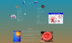 Starfish vs. Sea Anemone