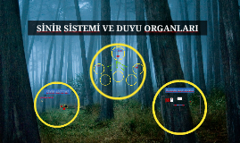 Copy of SİNİR SİSTEMİ VE DUYU ORGANLARI
