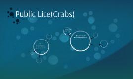 Public Lice(Crabs)