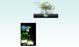Ecology: Unit 12