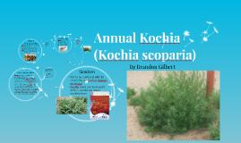 Annual Kochia