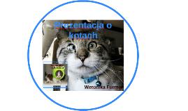 Prezentacja o kotach