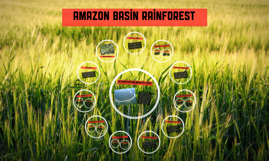 Amazon basin rainforest