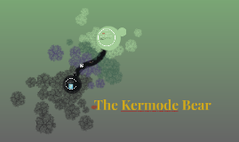 The Kermode Bear