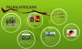 Copy of PALMA AFRICANA