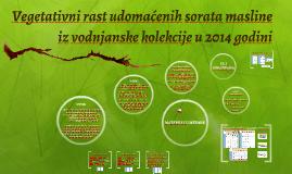 vegetativni rast udomaćenih sorata masline iz vodnjanske kol