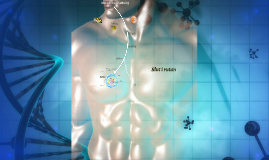Metabolism & Centrala Dogmen