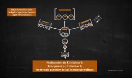 MADURACIÓN DE LINFOCITOS B
