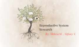 Reproductive System Research