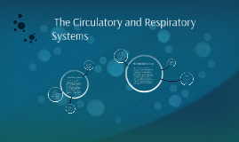 The Circulatory and Respiratory System