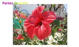 Copy of Partes de la flor