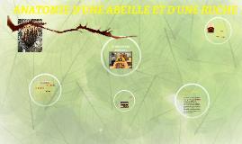 Copy of Copy of ANATOMIE D'UNE ABEILLE ET D'UNE RUCHE