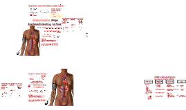 SF-8: Regulacija srednjeg arterijskog tlaka