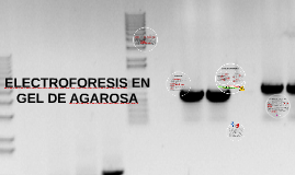 Copy of ELECTROFORESIS EN GEL DE AGAROSA