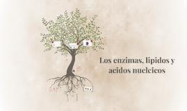 Los enzimas, lipidos y acidos nucleicos