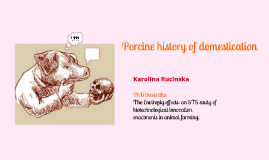 Porcine history of domesticaton