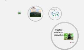 Tropical rainforest ecosistem