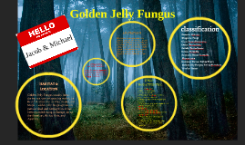 Copy of Golden Jelly Fungus