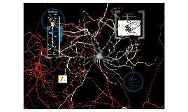 Bau und Funktion von Neuronen