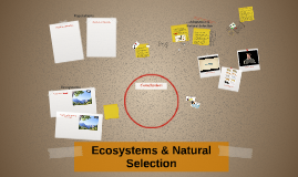 Ecosystems & Natural Selection